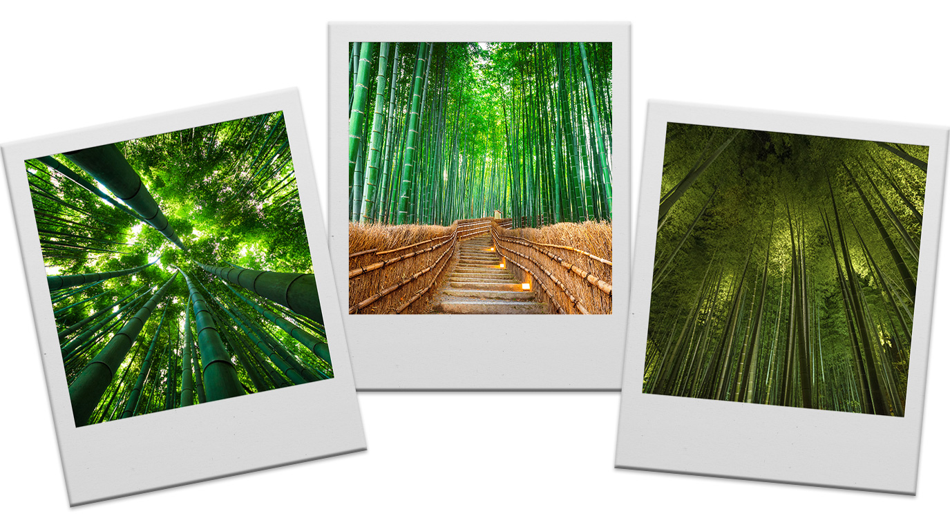 Three polaroids featuring snapshots of Arashiyama bamboo grove.